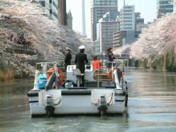 ぽけかる貸切特別チャーター・クルーズ。 桜の名所『目黒川の桜のトンネル』を船からお楽しみいただけます!