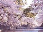 兵庫随一の人気を誇る桜名所!【夙川公園=しゅくがわ】の約1,660本の水辺の桜回廊でお花見!