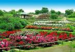 約300種6,500株が咲き誇る「浜寺公園」のバラ園