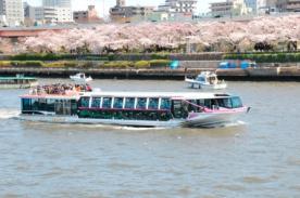 桜咲き誇る並木の横を隅田川クルーズで通り抜けます!