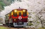 春の日差しを駆け抜けるトロッコ列車