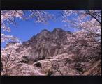 日本三奇勝の妙義山の桜は見事!