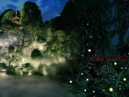 この季節しか楽しむことができない、幻想的なほたるの光を雲海とともにごらんください。