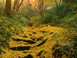 写真提供:鎌倉観光協会 獅子舞谷の紅葉