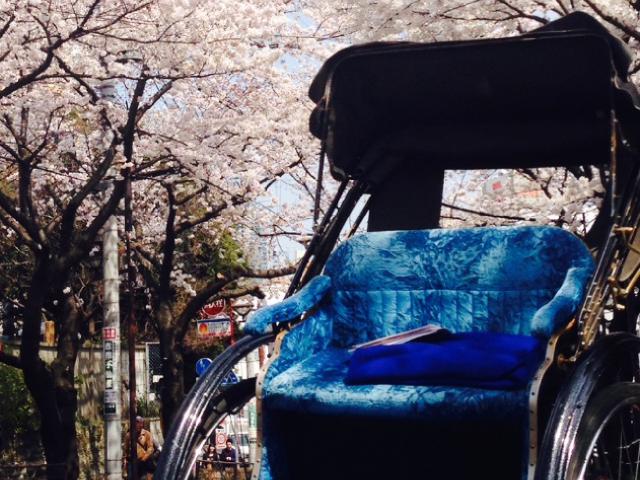 桜と人力車のコラボレーション